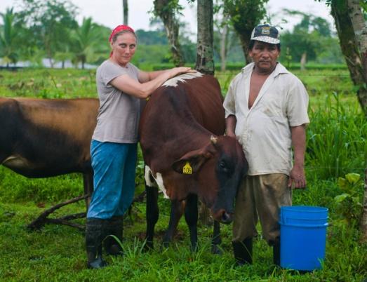 Family Cow Farming